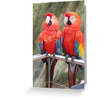 Red Macaw Parrots Greeting Card