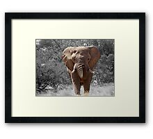 African Elephant Photography Framed Print