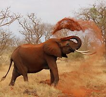 African Elephant Cleaning by tshirtdesign