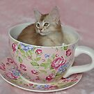 Teacup Kitten! by sarahnewton