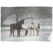 Snowy Horses Poster