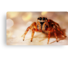 Close-Up Spooky Spider Canvas Print