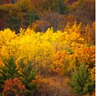 Fall in Central Pennsylvania by Shelley Neff