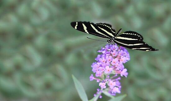 Zebra Longwing Butterfly by Shelley Neff