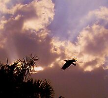 sky and clouds by gopalshroti