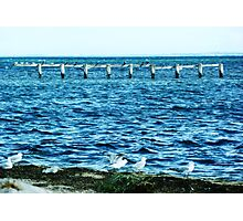 Beauty of the Sea at Werribee  Photographic Print