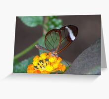 Transparent Butterfly  (Glasswing) Greeting Card