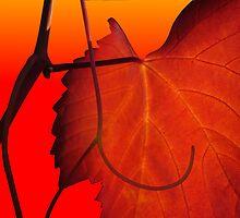 orange vine by shallay