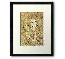 Grateful Golden Framed Print
