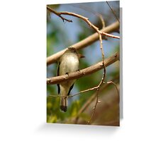 Flycatcher - Catchlight Greeting Card