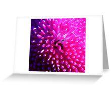 pink pom Greeting Card