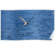 Blue Adriatic sea and gull Poster