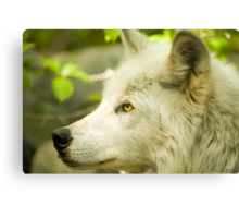 Artic Wolf - Forest of Wolves Series © Canvas Print