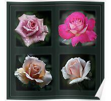 rose quad Poster