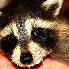 Baby Raccoon by Mien