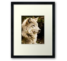 At Rest - Forest of Wolves Series Framed Print
