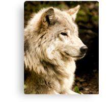 At Rest - Forest of Wolves Series Canvas Print