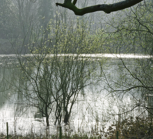 Pond near Home Farm, Ilam Sticker