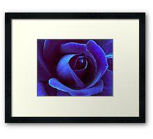 Icy Rose Framed Print