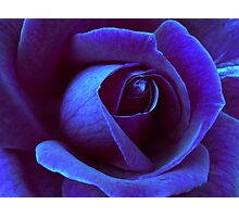 Icy Rose Photographic Print