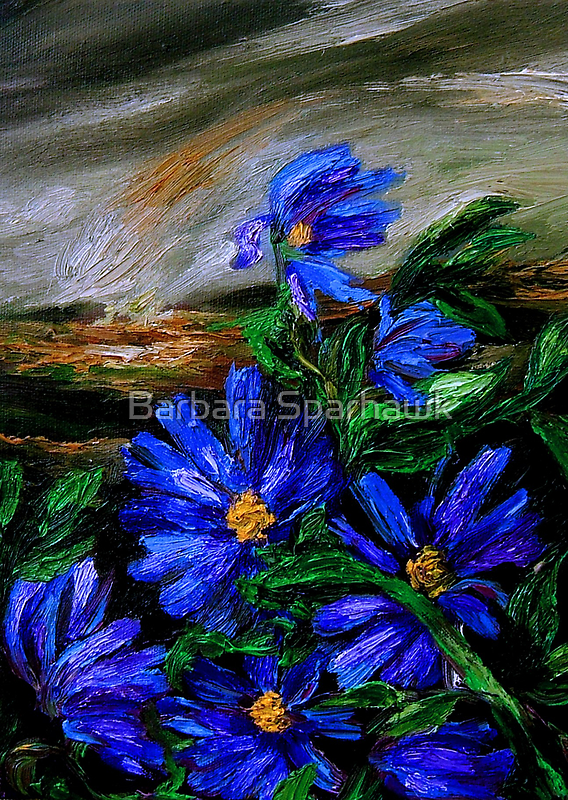 Wild Blue Daisies in Dust Storm- SOLD-9/19/10 by Barbara Sparhawk