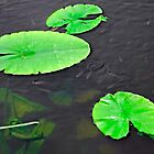Baby Fish Swimming Around the Lily Pads by Rod Johnson