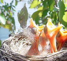 Baby robins after I woke them up! by GreyFeather