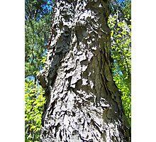 Shaggy Tree Photographic Print