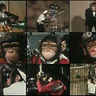 Monkey Film by MuscularTeeth
