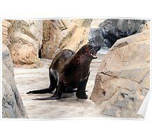 Happy Sea Lion Poster