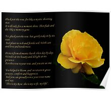Yellow Rose Greeting Card With Verse - Pluck Not the Rose  Poster