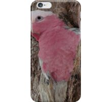 Nesting, Pink And Gray Galay (Rose Breasted Cockatoo) iPhone Case/Skin