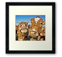 Poddy Calves Framed Print