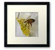 Does my bum look big in this Camellia Framed Print