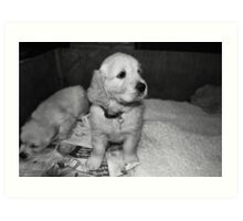 puppies... Art Print