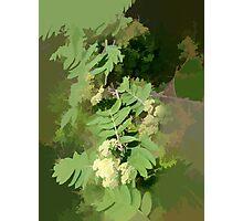 Abstract of Rowan Blossom (Mountain Ash) Photographic Print