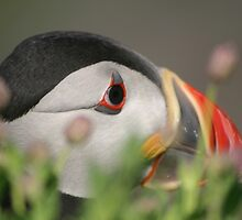 Puffin by Kye Valongo