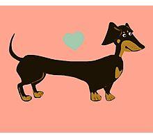 Just Peachy - Dachshund Sausage Dog Photographic Print