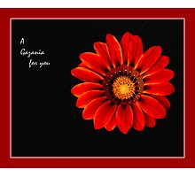 A Gazania for you Photographic Print