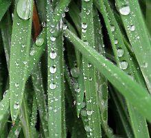 Greeen grass by verony