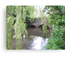 Willow Water Canvas Print