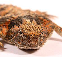Horny Toad by SB  Sullivan
