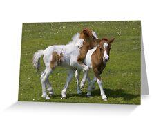 Horseplay (Shetland Ponies) Greeting Card