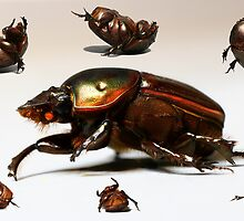 Breakdancing Beetle by Gareth Chalklen