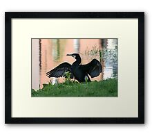 Grand Canal Cormorant Framed Print