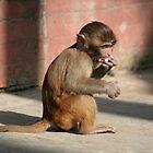 Temple monkey  by Cyana
