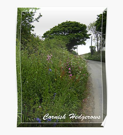 Cornish Hedgerows Poster