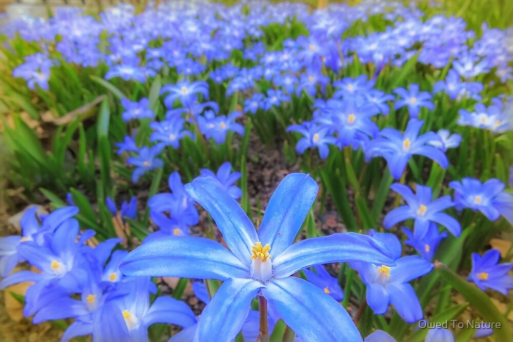 Blue bed of happiness by Owed To Nature