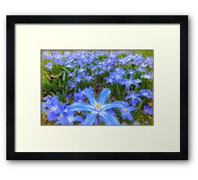 Blue bed of happiness Framed Print