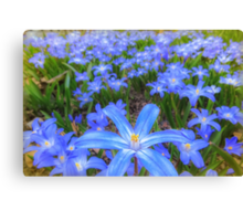 Blue bed of happiness Canvas Print